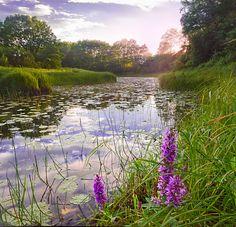 Purple sunset by Andrew Ignatov Purple Sunset, River, Outdoor, Nature, Beautiful, Outdoors, Naturaleza, Outdoor Living, Nature Illustration