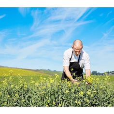Executive Chef Aaron Meneghelli harvests broccoli raab in our quarter-acre farm on property!  #FARM #garden #farmtotable #carnerosinn #love #locavore #napavalley #healthylife #plants #nature #chef #foodie #wellness #carneros #vegetables