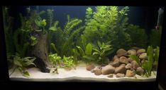 aquarium setup ideas - Google Search