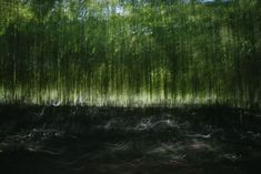 Motion photography no retouching - photo en mouvement pas de retouche - taken in a bamboo forest - dibon lambda C-print to - abstract photo by mederic degoy Motion Photography, Abstract Photography, Fine Art Photography, Abstract Photos, Abstract Art, Natural Light Photography, Photo Retouching, Artsy, Instagram