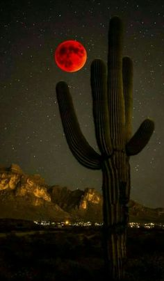 Yes Photography. Photo by Dark Dwarf You want to start working with concepts of photography that are your very own. Beautiful Moon, Beautiful Places, Beautiful Pictures, Desert Dream, Moon Pictures, World Images, Sedona Arizona, Best Photographers, Landscape Photos
