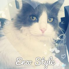 Enzo style #piclab