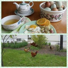 I wanted to make eggs and roasted potatoes this morning. After I got the potatoes in the oven. I discovered I only had one egg. I called my chicken neighbor and she had three dozen for me. Her eggs are the best because she feeds her chickens leftover kombucha scoby's and kefir grains. The chickens fight over them. I am not crazy they're better. You are what you eat, even for chickens. It's TRUE!  ~Cultured Food Life
