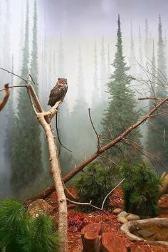 Owl in forest garden - beautiful backyard Beautiful Birds, Beautiful World, Beautiful Places, Stunningly Beautiful, Foto Nature, Belle Photo, Beautiful Creatures, The Great Outdoors, Wonders Of The World