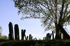 Le cimetière juif d'<i>Oberbronn</i>