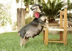 Lilica the dog recently stole our hearts with her ~flawless~ maternity photo shoot.