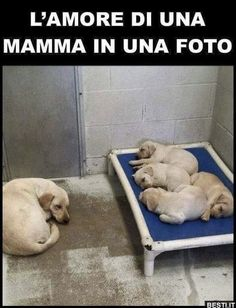 A Mothers Love love family cute photography animals dogs adorable dog puppy animal puppies I Love Dogs, Cute Dogs, Animals Beautiful, Cute Animals, Funny Animals, Game Mode, Amor Animal, Animal Control, Mothers Love