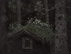a cottage in the woods Sombra Lunar, Hampshire, Witch Cottage, Forest Cottage, Forest House, Templer, Over The Garden Wall, 3d Fantasy, Southern Gothic