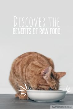 "Stop Feeding Your Pet ""Fast Food"" Start Feeding Your Pet ""Real Food"" Cat Recipes, Raw Food Recipes, What Is Raw, Raw Food Diet Plan, Natural Pet Food, Animal Nutrition, Raw Almonds, Eating Raw, Pet Health"