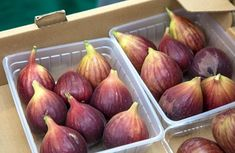Recipe to lower cholesterol levels (LDL). Soak 3 dried figs overnight in 2 dl apple cider vinegar. Eat the figs in the morning daily for 2 weeks. Reuse vinegar for 7 days. Homemade Detox, How To Make Homemade, Homemade Recipe, Medicine For Heartburn, Unhealthy Diet, Serbian Recipes, Dried Figs, Cholesterol Levels, 2 Ingredients