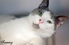 Adopted! Hooray for me!  Please visit my friends....I wish for them the luck that I had!! A home, wow! It's what we long for and so deserve. thanks for spreading the word...............Sweet Sammy is looking for a home to bring love to! He is in Manahawkin, Nj at  S.Ocean Cty. Animal Shelter