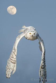 Gorgeous shot of an owl!