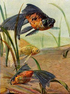 Goldfish - Vintage Art Explosion!
