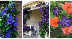 Clematisz, ami akár a ház falát is díszítheti! Contemporary Flower Arrangements, Garden Of Eden, Floral Wreath, Outdoor Structures, Wreaths, Home Decor, Couches, Budapest, Gardening