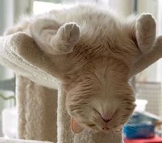 (26) 23 Sleeping Positions, As Illustrated By Cats - Between Letters - Quora