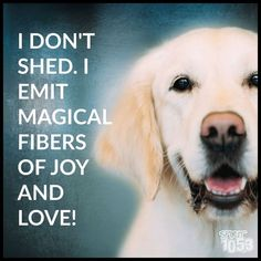 Magical Fibers that roll across my floor like a tumbleweed. #DogQuotes