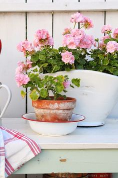 I love geraniums! (Article is not in English but the pictures are beautiful)
