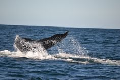 Zuid-Afrika - Plettenberg Bay - Whale tail