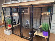 Indoor Cat Enclosures, Diy Cat Enclosure, Outdoor Cat Enclosure, Outdoor Cat Kennel, Outdoor Cat Cage, Cat Cages Indoor, Indoor Cats, Outside Cat House, Cats Outside