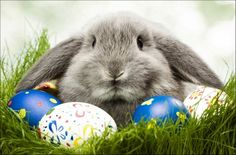 Beautiful Easter grey rabbit is depicted among eggs. The eggs are of different colors and decorated with prints. The rabbit is flyffly, it looks a little scared and keeps its ears down. The rabbit and eggs are located in green grass. Grey Bunny, Cute Bunny, Hoppy Easter, Easter Eggs, Easter Food, Ostern Wallpaper, Easter Bunny Pictures, Somebunny Loves You, About Easter