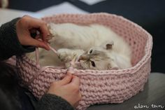 Crocheted Cat Bed   33 Totally Do-Able D.I.Y. Projects For Your Pets