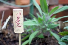 5 Simple DIY Plant Markers