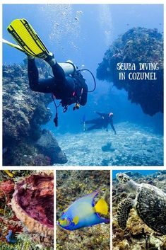 Cozumel is one of the top diving spots in the world. Cozumel Scuba Diving, Snorkeling, Riviera Maya, Cozumel Island, Big Shark, Dive Shop, Cozumel Mexico, Underwater World, Deep