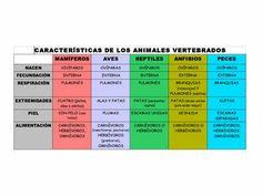 Fichas para primaria: Clasificación de los animales vertebrados