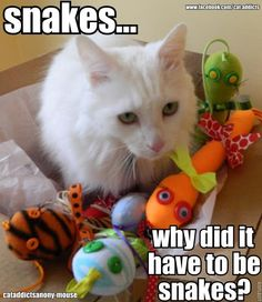 Poor Indy! Just ignore the snakes, honey!