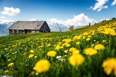 Heidiland by Nicolas Zonvi on Austria, Switzerland, Vineyard, Explore, Adventure, Mountains, City, Places, Chalets