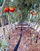 diy drip irrigation ideas....these would cut down the work for a disabled person because you water less often...