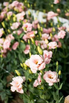 Lisianthus: the world's most romantic flower!