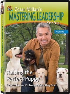 Mastering Leadership Series Vol. 6: Raising the Perfect Puppy (DVD) | Dog Whisperer Cesar Millan