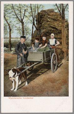 Twee jongens en twee meisjes in Walcherse streekdracht bij hondenkar. Het jongetje links in de kar draagt nog een jurkje, maar wel reeds een pet. 1868-1905 #Zeeland #Walcheren
