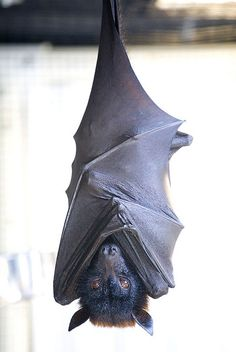 Bat very cool.