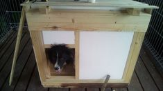 doghouse_1