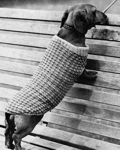 VINTAGE REFORMATTED KNITTING PATTERN DACHSHUND DOG COAT