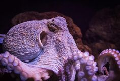 What these.  You won't believe them.  11 Octopuses Caught in the Act of Being Awesome   Mental Floss