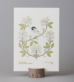 massachusetts (from birds and blooms of the 50 states) letterpress print