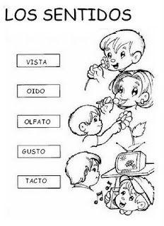 El Rincón De La Educadora Preescolar: LOS SENTIDOS