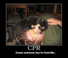 Dog performing CPR