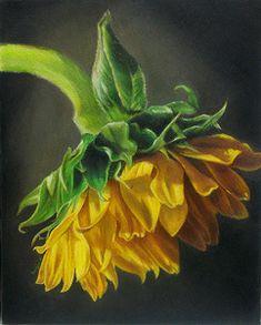 Floral Gallery - Colored Pencil Art by Ranjini Venkatachari