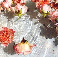 ~~♡~~floating~flowers~~♡~~ by Isabelle Menin Water Aesthetic, Flower Aesthetic, Pink Aesthetic, Images Esthétiques, Floating Flowers, Floating Water, Water Flowers, Flowers In A Vase, Painting Flowers