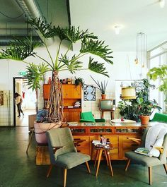Lusting after this lacy tree philodendron in this lovely capture from @sophieallegaert  thank you for sharing your #jungalowstyle !