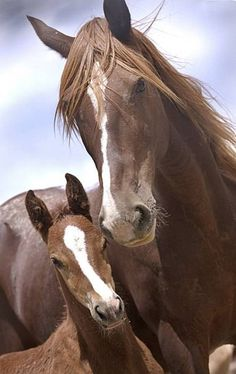 Awe so cute a wild mare with the cutest foals in the world! Baby Horses, Cute Horses, Horse Love, Wild Horses, Wild Mustang Horses, Baby Dogs, Animals And Pets, Baby Animals, Cute Animals