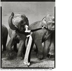 Dovima with elephants, evening dress by Dior, Cirque d'Hiver, Paris, August 1955 Photograph by Richard Avedon; © The Richard Avedon Foundati. Andy Warhol, Christian Dior, Vintage Photography, Art Photography, Fashion Photography, Classic Photography, Professional Photography, Street Photography, Artistic Photography