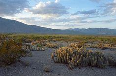 Dentro del desierto de Coahuila, al norte de México, se localiza el Valle de Cuatro Ciénegas, un lugar que, debido a sus características geográficas, posee el mayor número de especies endémicas y es uno de los pocos ecosistemas de manantial en Norteamérica.   Hace millones de años el Valle de Cuatro Ciénegas emergió …