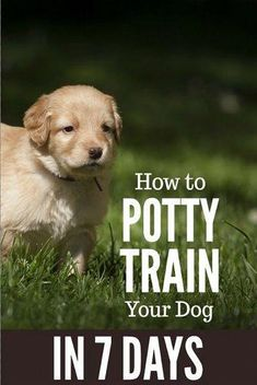 to Potty Train a Dog in 7 Days Potty training a dog of any age in as little as 7 days.Potty training a dog of any age in as little as 7 days. Puppy Potty Training Tips, Training Your Dog, Training Collar, Agility Training, Dog Agility, Crate Training, House Training A Puppy, Dog Obedience Training, Puppy Toilet Training