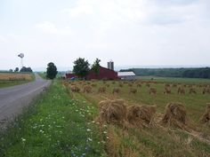 "Amish life,,,""bringing in the sheves, bringing in the sheves, we will come rejoicinig, bringing in the sheves...."""