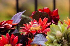 Sophisticated Autumn Wedding Photos by Paul Krol | Sash and Satin